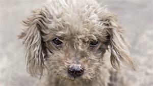 Hund Im Haus : hund vor haus fast erfroren prozess nun im sommer drei ~ Lizthompson.info Haus und Dekorationen