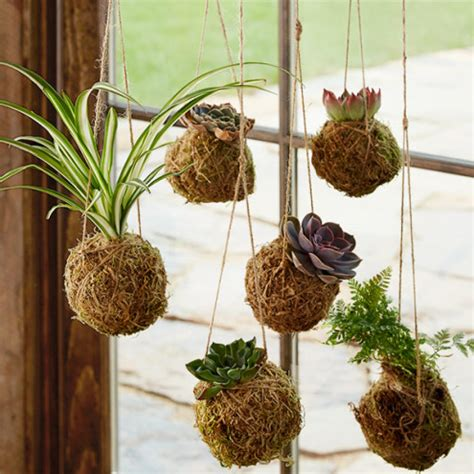 hanging bouquet kokedama hanging string gardens home accents vivaterra