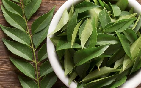bay leaf replacement top 28 bay leaf replacement herb leaf border of bay leaves lavender sage valerian what s a