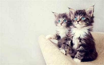 Cat Funny Desktop Wallpapers