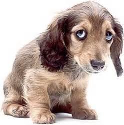 Sad Dog Abuse Quotes. QuotesGram
