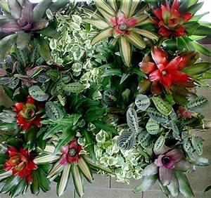 Vertical Green Walls-Living Walls of Indoor Plants- Plant