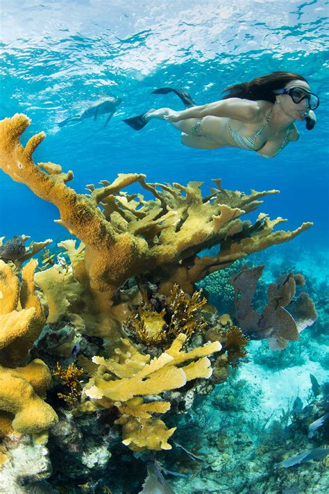 bahamas snorkeling stuart cove s snorkel trips and tours