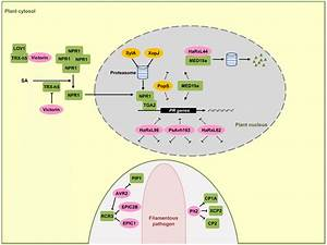 Effectors Interfering With Sa