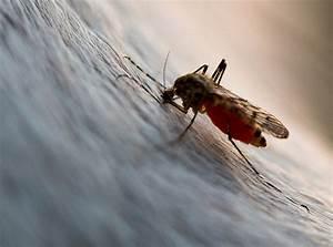 Mücken Im Schlafzimmer Bekämpfen : m cken gene bestimmen wer gestochen wird igpmagazin ihre gesundheitsprofis ~ Markanthonyermac.com Haus und Dekorationen