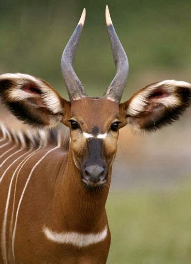 African Animal Pictures Stunning Creatures African