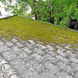 Moos Auf Dem Dach : dachreinigung dachreinigung dachrinnenreinigung dachbeschichtung ~ Watch28wear.com Haus und Dekorationen