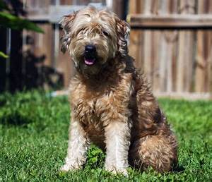 Anti Allergie Hund : allergikerhunde hunde f r allergiker ohne hundehaarallergene ~ Orissabook.com Haus und Dekorationen