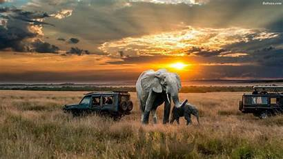 Elephant Desktop Wallpapers Safari African Elephants Animals