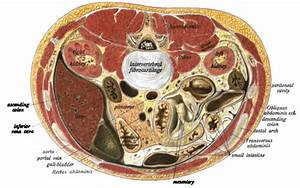 Akutes Abdomen  Definition  Symptome  Diagnose  U0026 Therapie