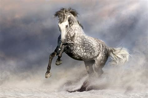 andalusian horse mane long grey motion preview