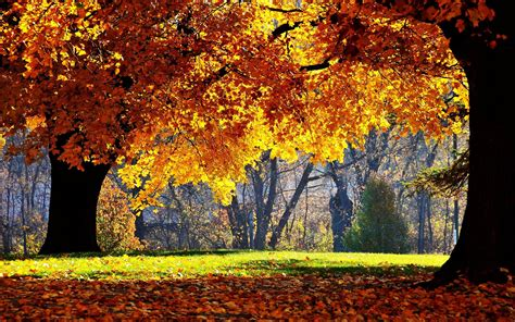 fall computer backgrounds fall computer backgrounds 183