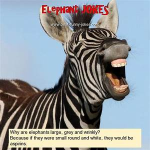 Elephant Jokes  Why Are Elephants La