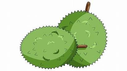 Clipart Buah Durian Buahan Apel Alpukat Pisang