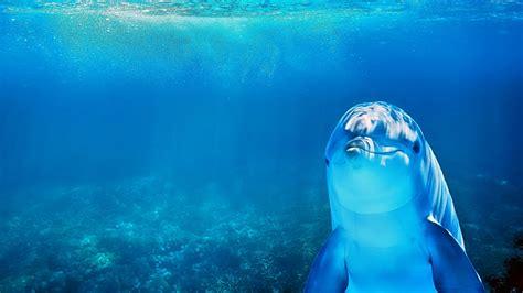 hintergrundbilder kostenlos fuer pc delfine