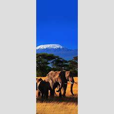 Mt Kilimanjaro, Amboseli National Park, Kenya Dream