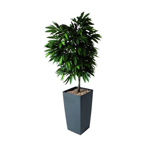 plante vanille en pot 28 images plante en pot sur un fond blanc images libres de droits