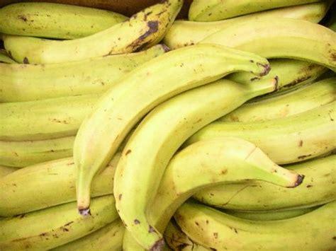 comment cuisiner les bananes plantain les vertus des fruits