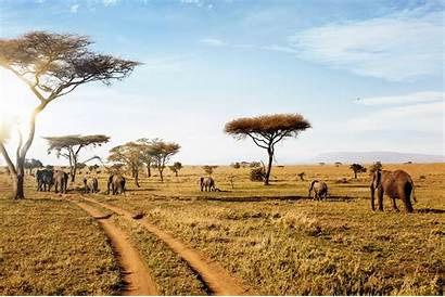 Safari African Africa Tour Tours Trip Virtual