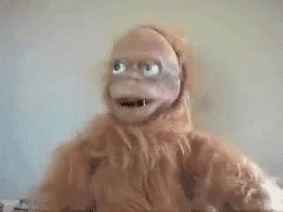 confused monkey gifs tenor