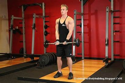 Biceps Workout Bodybuilding Short Head Bicep Muscle