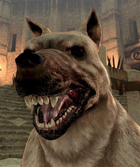 dog dragon age ii dragon age wiki fandom powered