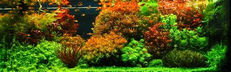 Aquascape Environmental by Aquascapes Where Gardening And Water Features Meet