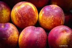 Wann Kann Man Rhabarber Ernten : wann kann man nektarinen ernten infos zur besten erntezeit ~ A.2002-acura-tl-radio.info Haus und Dekorationen