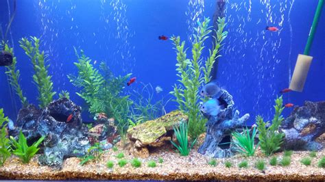 Animated Fish Aquarium Wallpaper - fish aquarium wallpaper wallpapersafari