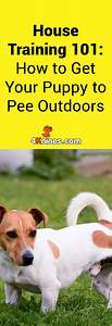1000 ideas about need to pee on pinterest i need to pee for How to train your dog to pee