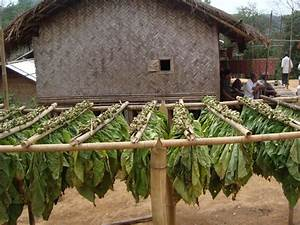Tobacco - World Crops Database