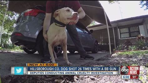 dog  dies   shot  times  bb gun