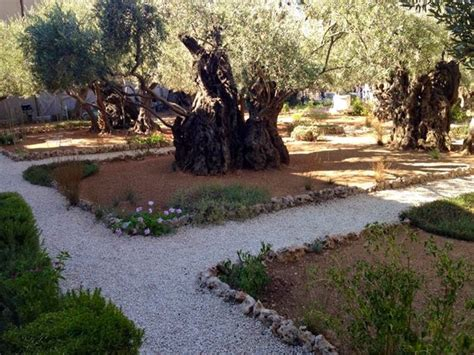 Garden Of Gethsemane Bible by The Bible Brought To Study Abroad 2013 Jerusalem