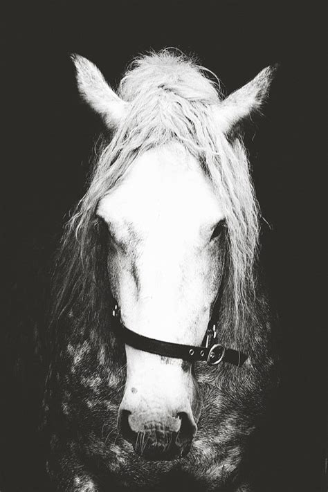 11979 professional black and white photography photographyhorse artblack and white by pomelorice on