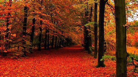 Autumn Wallpaper by 10 Best High Definition Autumn Wallpaper Hd 1080p For