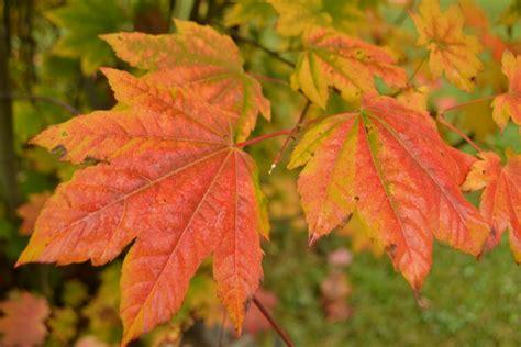 Skubėkite rinkti šias rudens gėrybes - vėliau pravers
