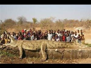 World's 15 Largest Animals You Won't Believe Actually ...
