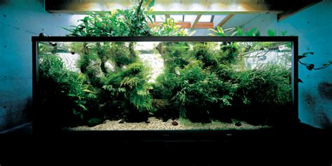 nature fish aquariums  takashi amano