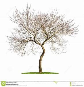 Almond Tree Drawing | www.imgkid.com - The Image Kid Has It!