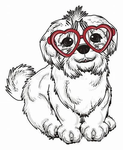 Glasses Dog Maltese Funny Illustration
