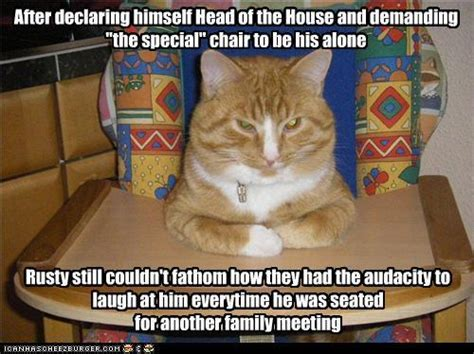 funny cat pictures  captions entertainmentmesh