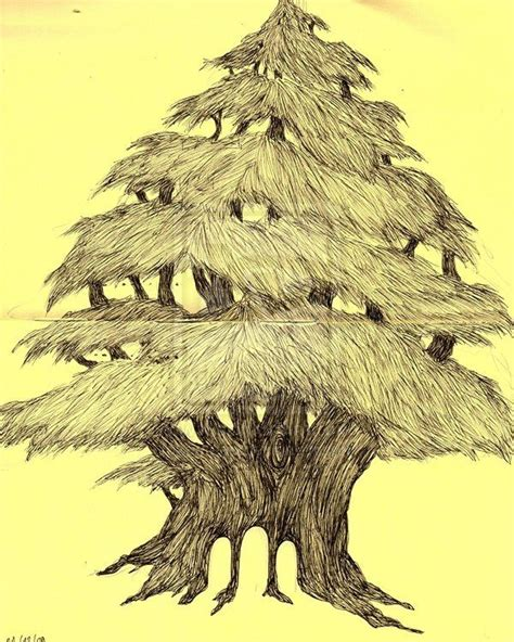 17 Best Images About Cedar Trees On Pinterest The Old