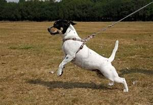 How To Stop Your Dog Pulling On The Leash The BOWRAIN Site