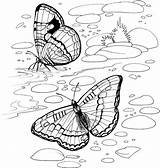 Coloring Pages Purplekittyyarns Butterfly sketch template