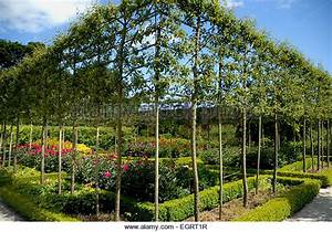 Espaliered Tree Stock Photos & Espaliered Tree Stock