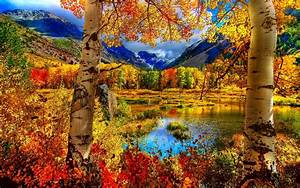Color, Forest, Wallpapers, -, Top, Free, Color, Forest, Backgrounds