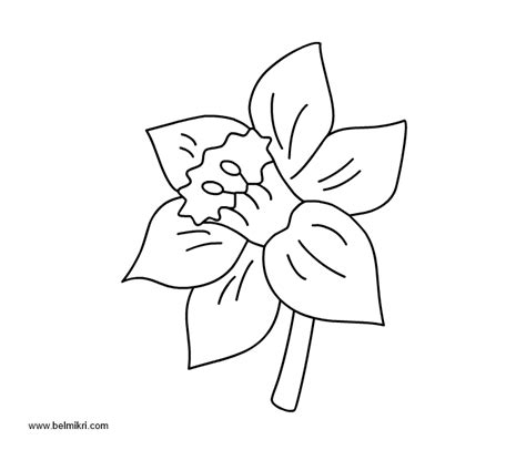 Kleurplaat Narcis by Printable Coloring Pages Dot The Dot