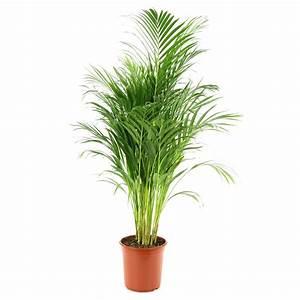 Plante Verte D Appartement : ar ca cm d24cm autres marques jardinerie truffaut ~ Premium-room.com Idées de Décoration