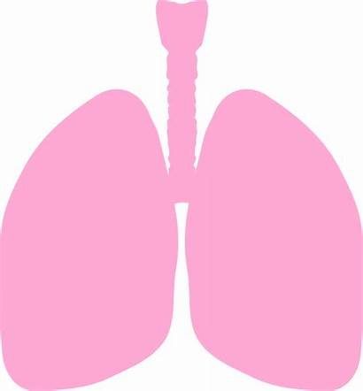 Lungs Clip Clipart Vector Clker Royalty