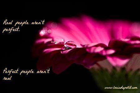 pink flower raindrop glistening shaddows flower